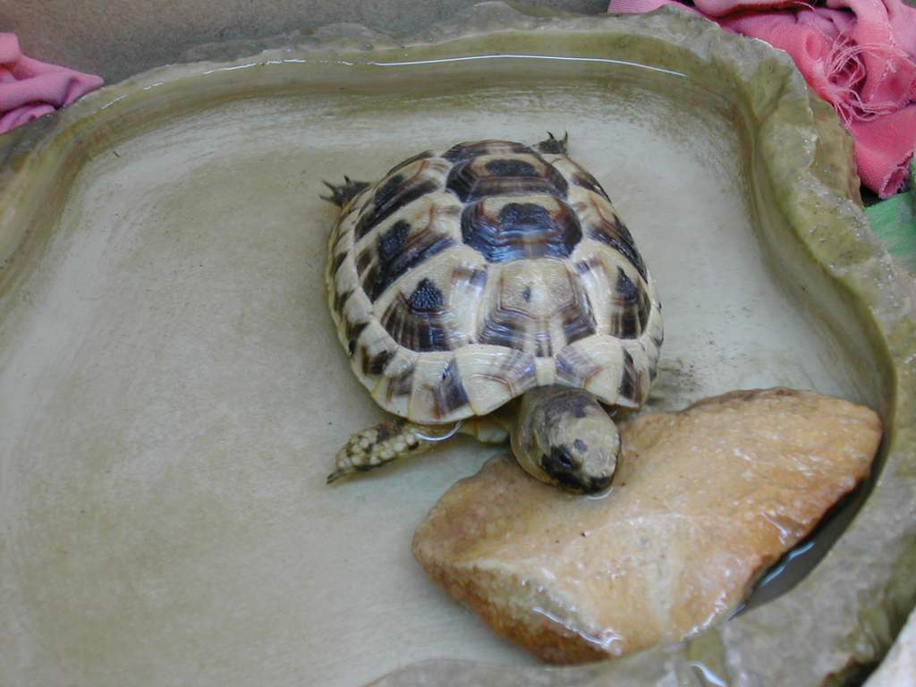 Les Tortues Alimentation